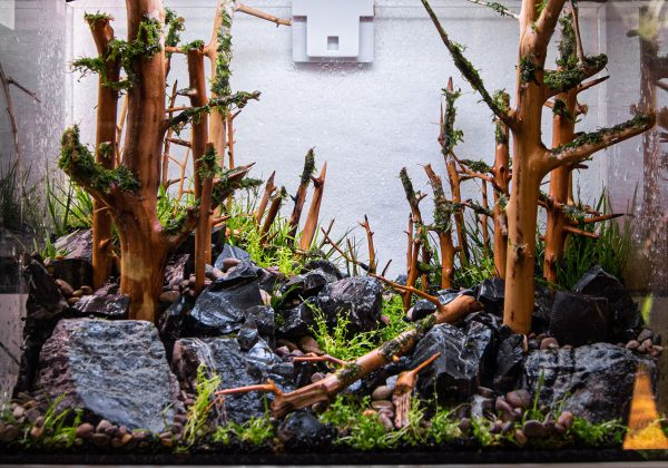 forest tank